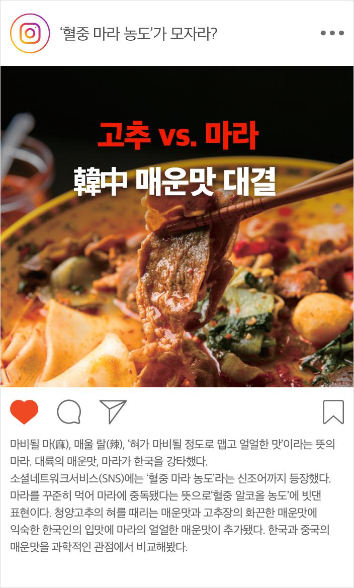 고추 vs. 마라 韓中 매운맛 대결